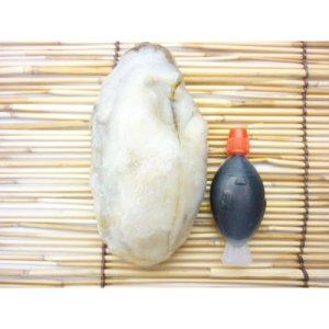 画像4: 冷凍かき 広島県産 広島牡蠣2L(LL) 1kg
